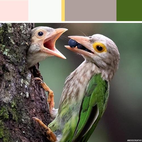 Moodcreativo_ispirazione-colore-16-Blog